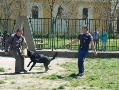 Rendőrkutya bemutató 2015.04.22.
